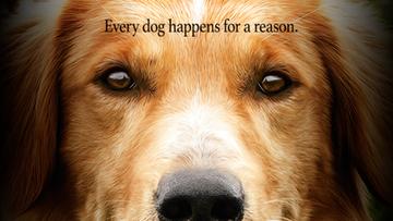 Dręczyli psa na planie filmu. PETA bojkotuje obraz, premiera przesunięta