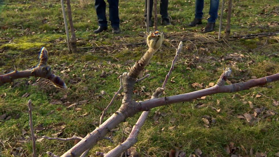 Interwencja - Poszkodowani sadownicy z Mazowsza. Starty wyliczają na 600 tys. zł